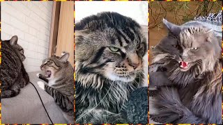 Funny Angry Cats Compilation   Cats Hissing Compilation......Animals #37