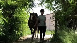 Wintec Pro Endurance saddle