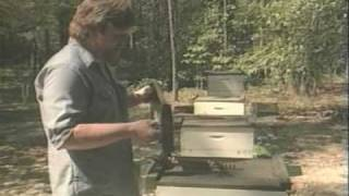 Honey Bees and Beekeeping 4.2: Queen Rearing