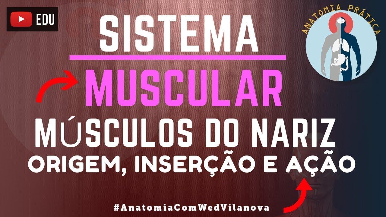 Músculos do nariz: Origem | Inserção | Ação - Sistema Muscular ...