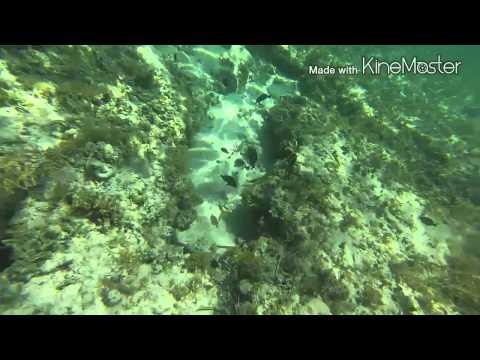 Snorkeling grand Bahama bank 2014