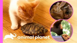 These Unlikely Animal Friendships Are Just The CUTEST! | Too Cute