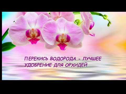 Перекись водорода-лучшее удобрение для орхидей