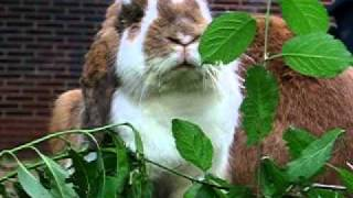 Kaninchen atmet durch den Mund