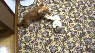 Jolly e Tobby brincando! *___*//♥ [ 26/Abril/2011]