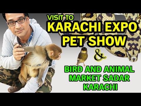 Pet Show 2017 Karachi Expo  |  Night visit to Bird and Animal Empress Market Sadar Karachi