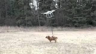 Как не надо выгуливать свою собаку