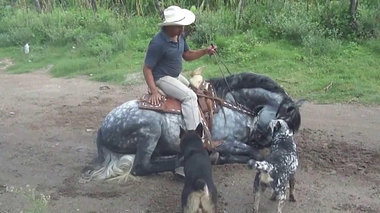 caballo frisian con azteca - YouTube