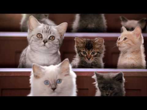 Академия котят: полное собрание рекламы Вискас