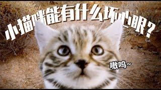 超萌小動物合集第六彈!快來吸貓貓,是什麼貓咪讓猛男陣亡只需3秒『大貓』| 小俠說電影