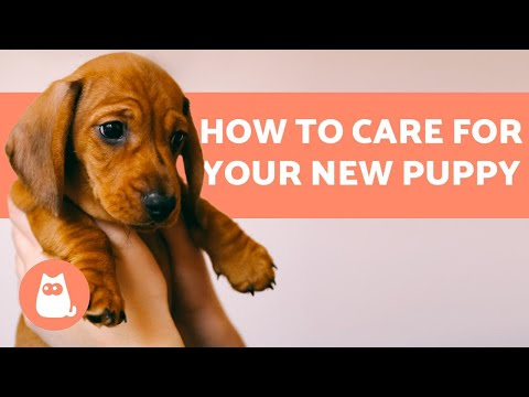 How to TAKE CARE of a PUPPY?  Complete Guide to Puppy Care