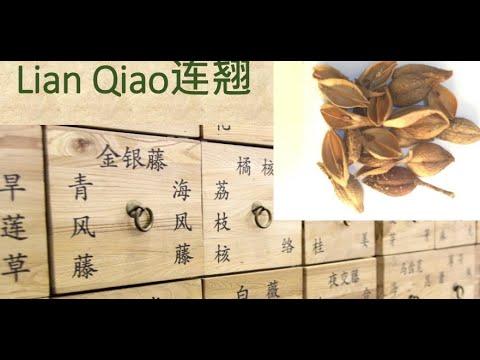 2 Chinese Herbal Medicine, Traditional Chinese Medicine – Lian Qiao (Forsythia Fruit) 连翘 – 中医中药 #Herbalmedicine