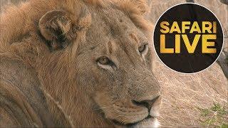 safariLIVE - Sunrise Safari - July 8, 2018 (Part 1) thumbnail