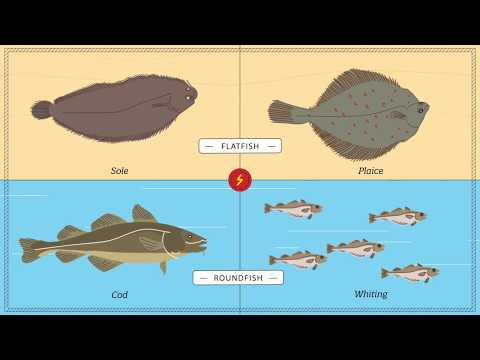 Effects Of Electric Pulse Fishing On Fish