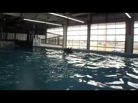 Killian Splash Moraine Your Pup 2/18/17