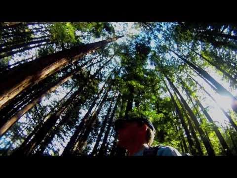 Redwoods Regional Park