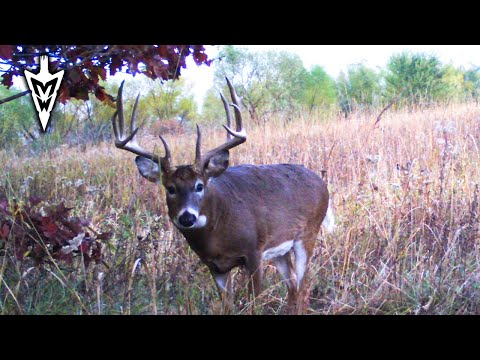 The Best Time To Hunt In October | Midwest Whitetail