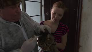 Бесплатная вакцина для домашних животных
