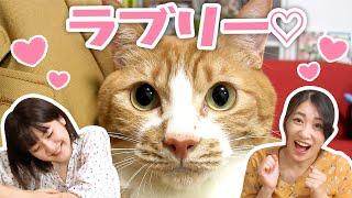 いっちー&なる【いちなる】です! 今回は、いちなる動画にもたびたび登場してきた猫ちゃん「ピッピ」をまとめてみました   =====================...