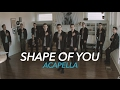 Shape of You  [Acapella]