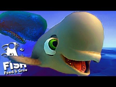 Feed and Grow Fish - Ataquei a Baleia Assassina, Jogando De Beluga! | (#25) (PT-BR)