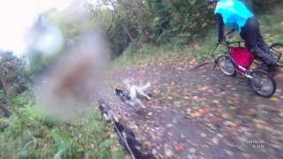 Siberian Husky Club Northern Ireland Rally , My 2 Dog Team , Balto And Meika