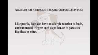 Hair Loss on Dogs: Causes and Cures Of Hair Loss on Dog