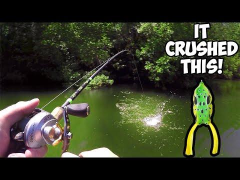 epic-topwater-frog-bass-fishing!-|-frog-fishing-blowups!