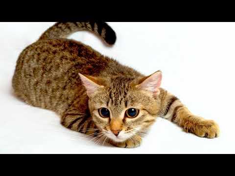 Как приучить котенка быть ласковым