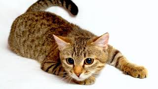 Как сделать кота ласковым, ручным и послушным?