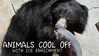 Animals Receive Ice Enrichment