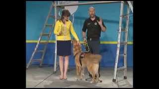 Disaster Working Dogs on WVC Live! Presentations at the Plaza at WVC 2014 (Emilie Barta, Host)
