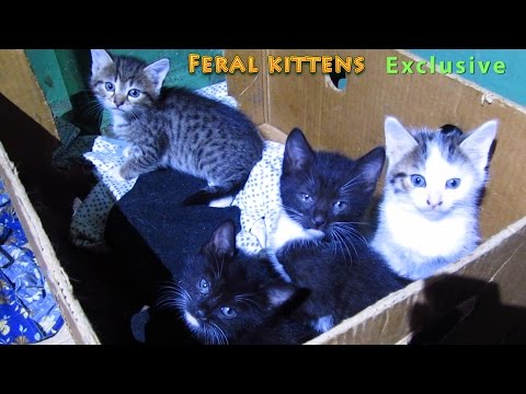 Funny kittens hissing