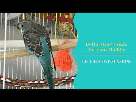 Dollar Store Finds For Budgies/Parakeets OR Small Birds (Under $2)