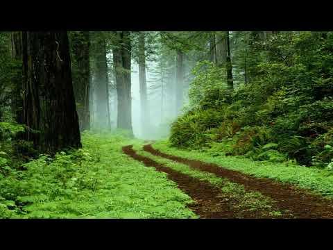 Orman Kuş Sesleri Eşliğinde Piyano Dinle, Huzur Rahatlama