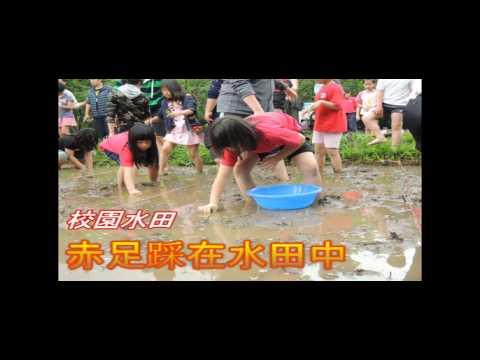 湖田國小  校園插秧慶米壽
