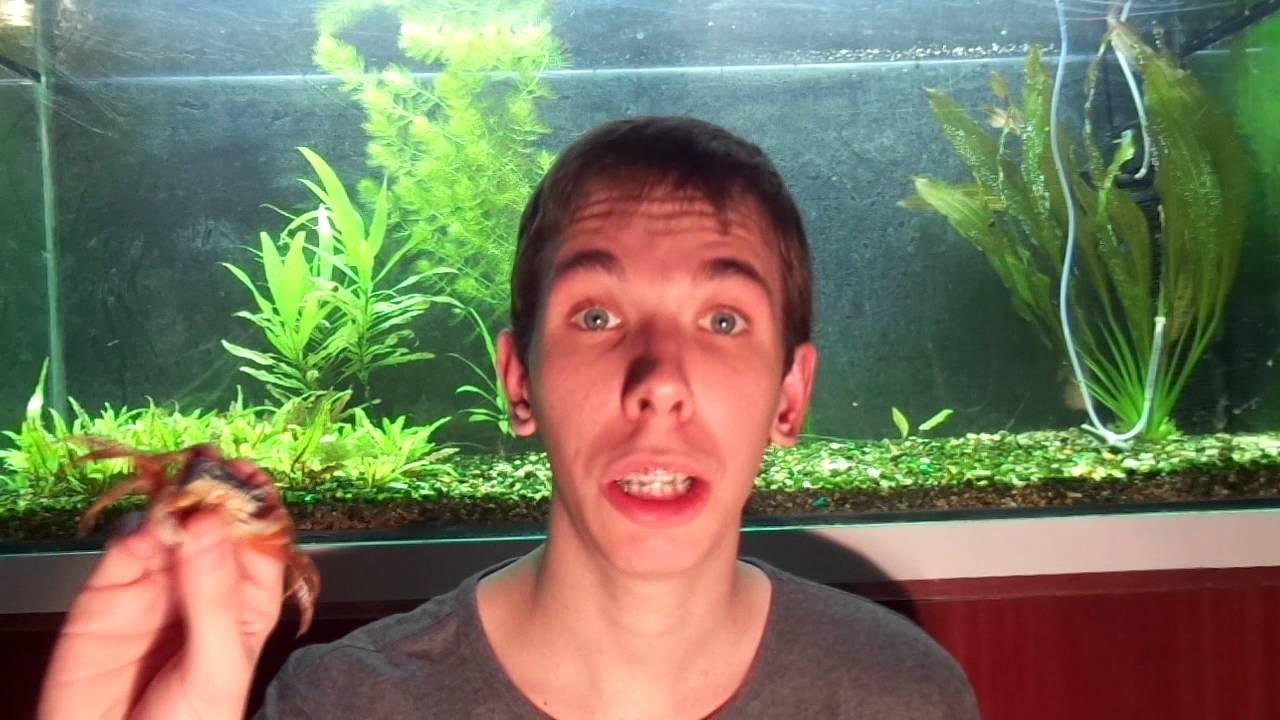 Содержание Радужного Краба в домашнем аквариуме Знакомство с Зоей