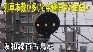 【駅に行って来た】阪和線百舌鳥駅は列車本数が多いので、中継信号が面白い!