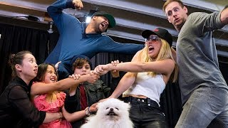 Whose Dog Is It? | Lele Pons