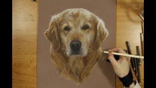 Colored Pencil Drawing: Golden Retriever - Speed Draw | JosYMovieS