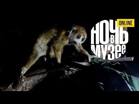 Ночь в музее: по ночной экспозиции с фонариком Игорь Фадеев