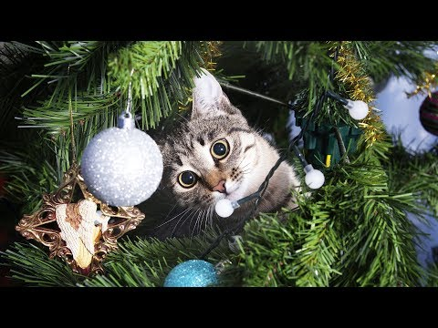 Funny Cats in Christmas Trees FUNNIEST cat Videos Compilation