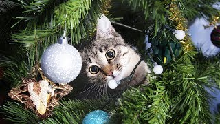 Funny Cats in Christmas Trees Compilation (2017)