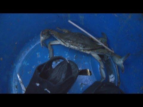 Crabbing Connecticut