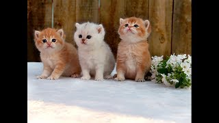 Three little kittens went outside for a walk 😻