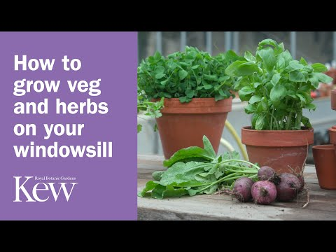 How to grow vegetables and herbs on your windowsill | Kew Gardens
