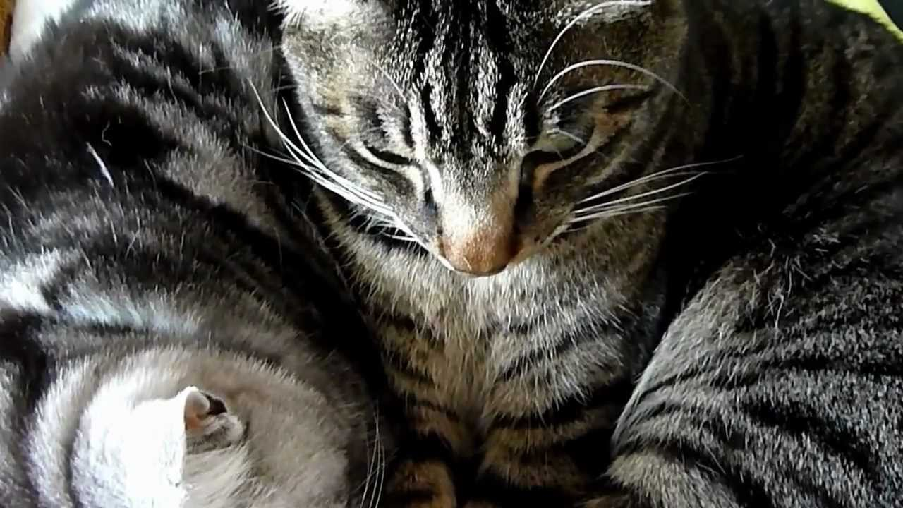 what causes a uti in cats