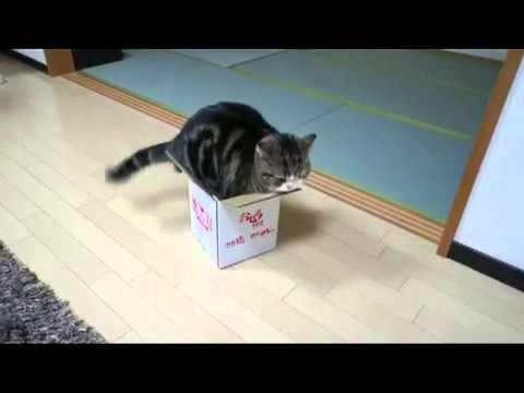 Katze Karton