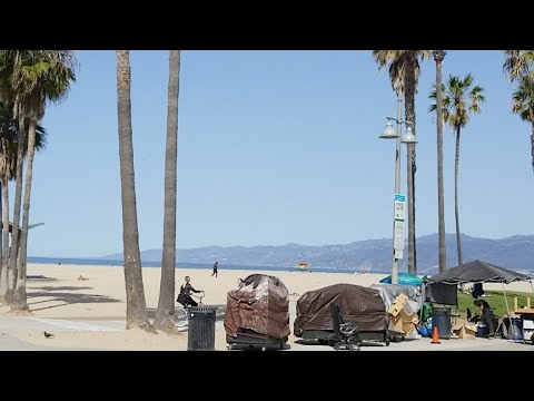 Venice Beach Live