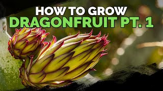 How to Grow Drągon Fruit (Part 1) | Soil, Sun, Water, Containers, and Fertilizing